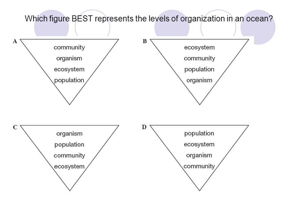 Which figure BEST represents the levels of organization in an ocean