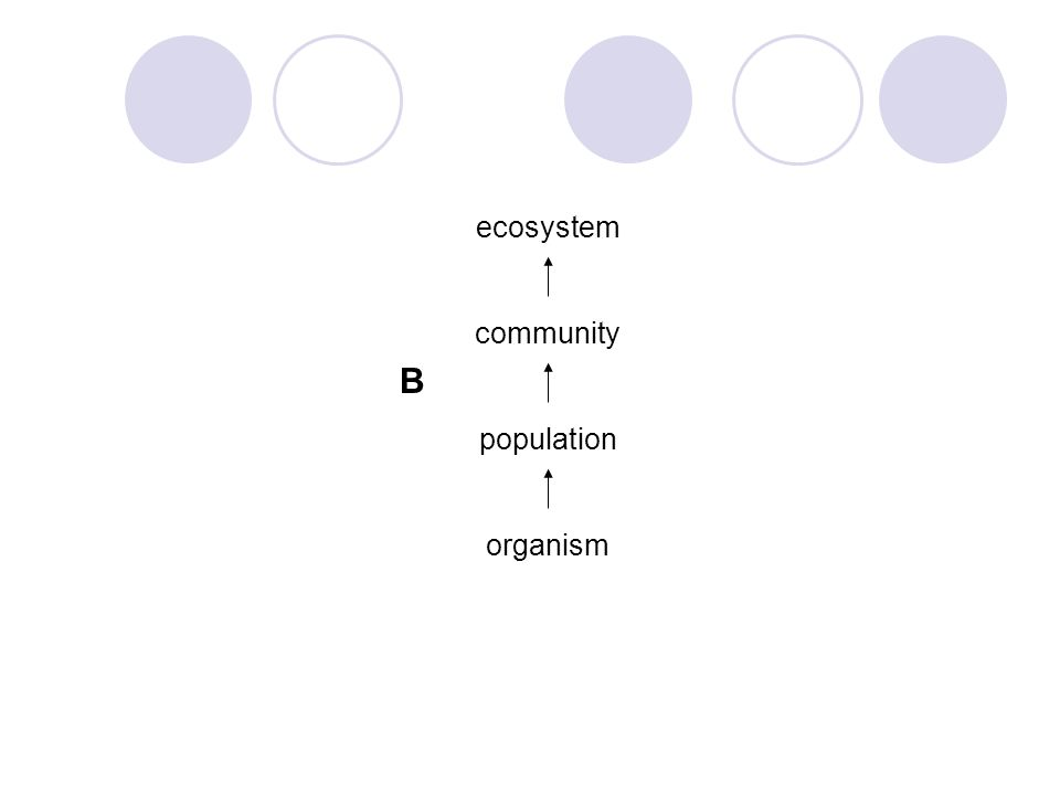 ecosystem community population organism B