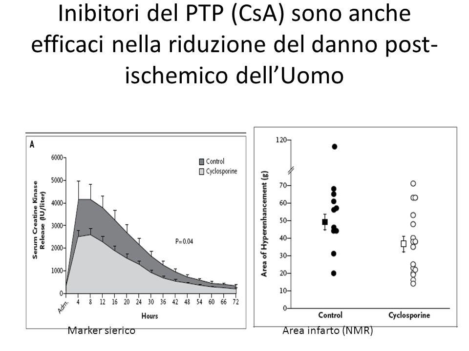 Inibitori del PTP (CsA) sono anche efficaci nella riduzione del danno post-ischemico dell'Uomo