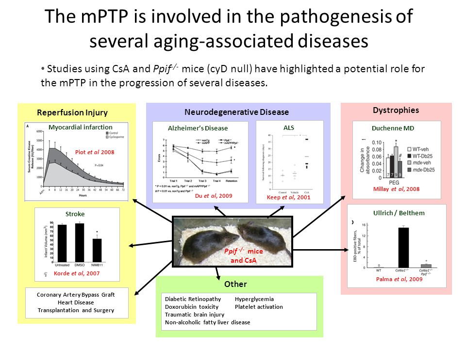 The mPTP is involved in the pathogenesis of