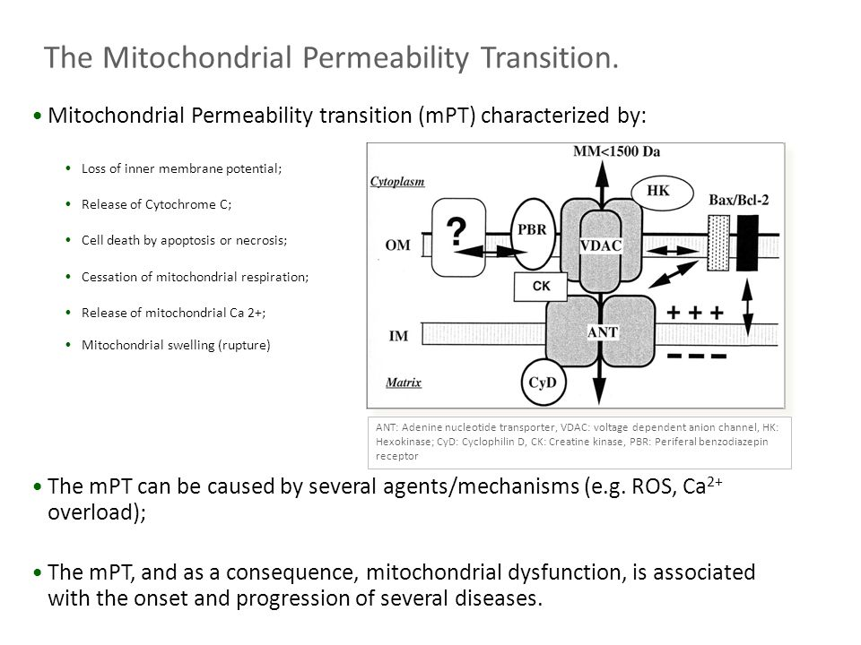 The Mitochondrial Permeability Transition.