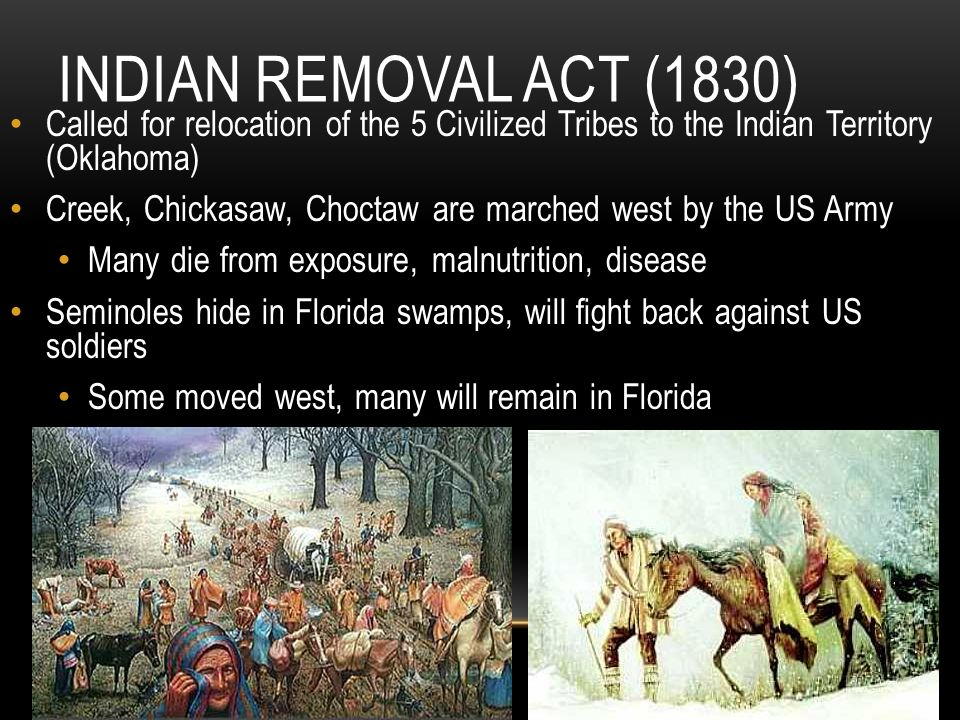 the indian removal act essay