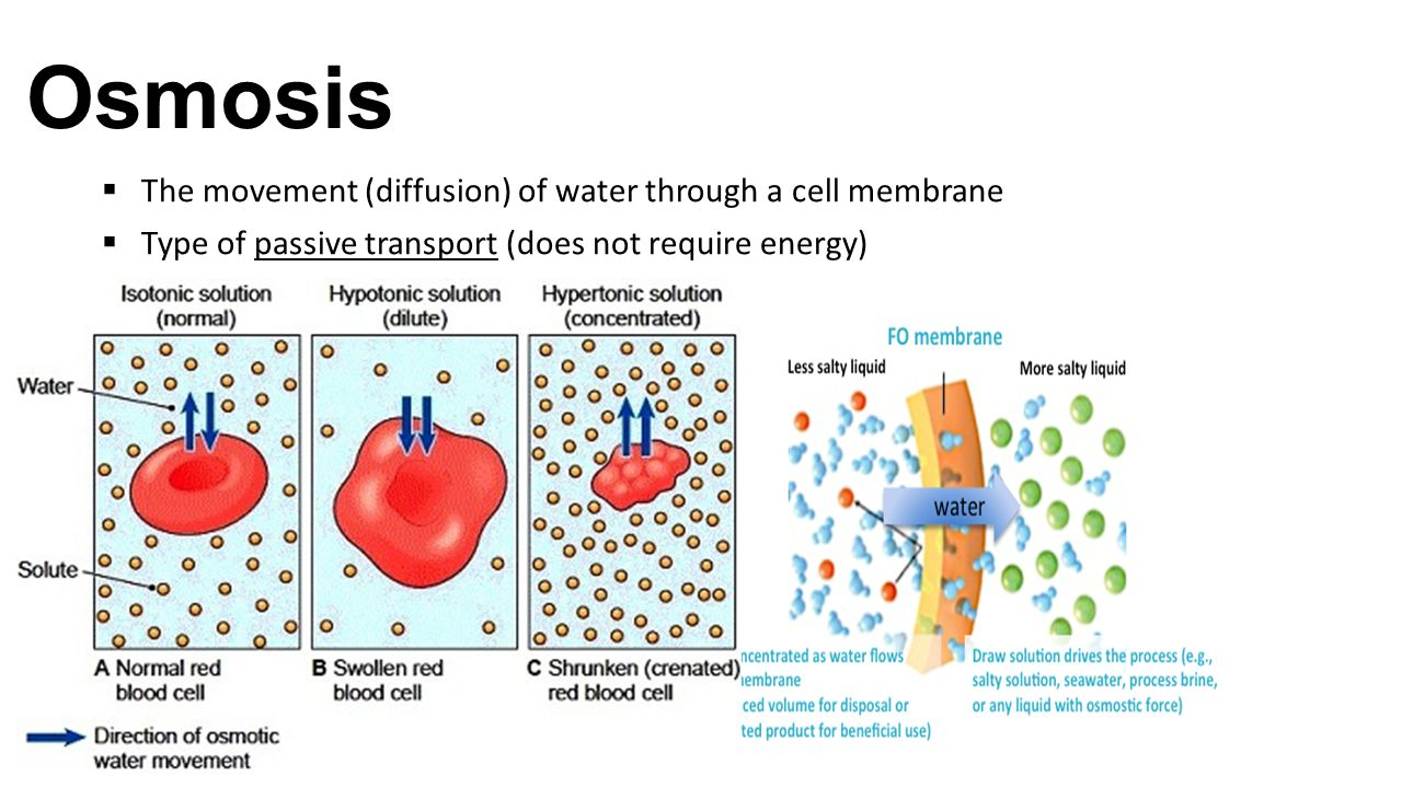 osmosis and cell Osmosis osmosis is the diffusion of water from an area of high concentration to an area of low concentration across a membrane cell membranes are completely permeable.