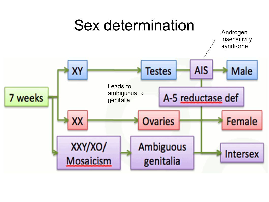 Sex determination Androgen insensitivity syndrome