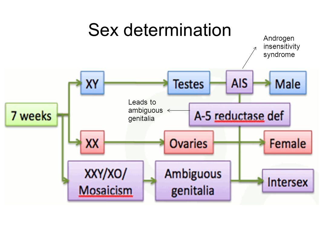 Sex determination Androgen insensitivity syndrome