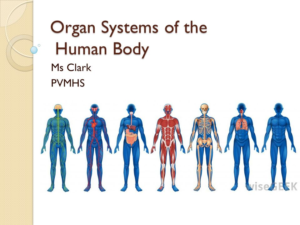 Organ Systems of the Human Body - ppt video online download