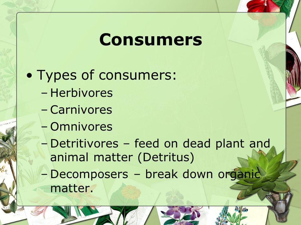 Consumers Types of consumers: Herbivores Carnivores Omnivores