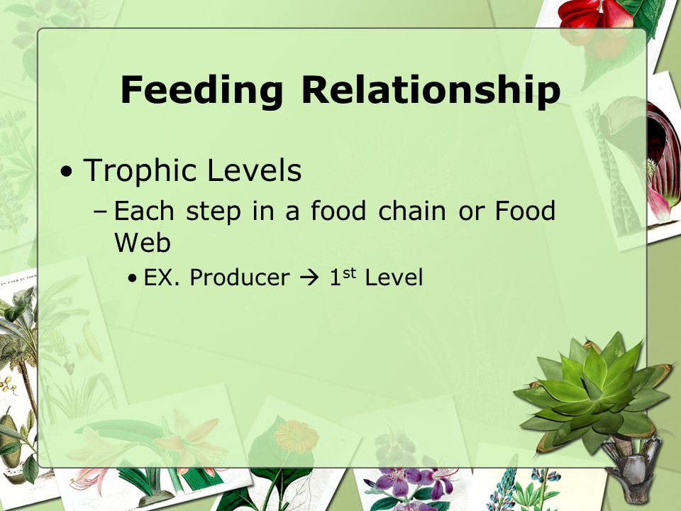 Feeding Relationship Trophic Levels