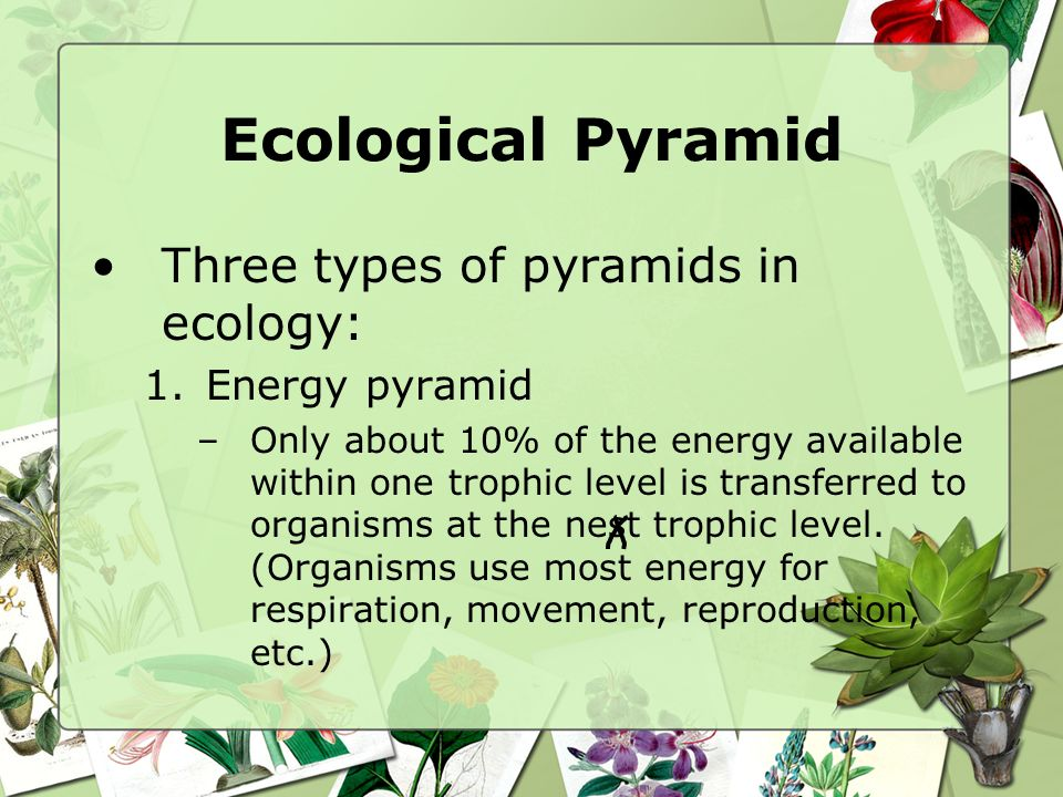 Ecological Pyramid Three types of pyramids in ecology: Energy pyramid