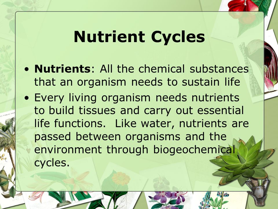Nutrient Cycles Nutrients: All the chemical substances that an organism needs to sustain life.