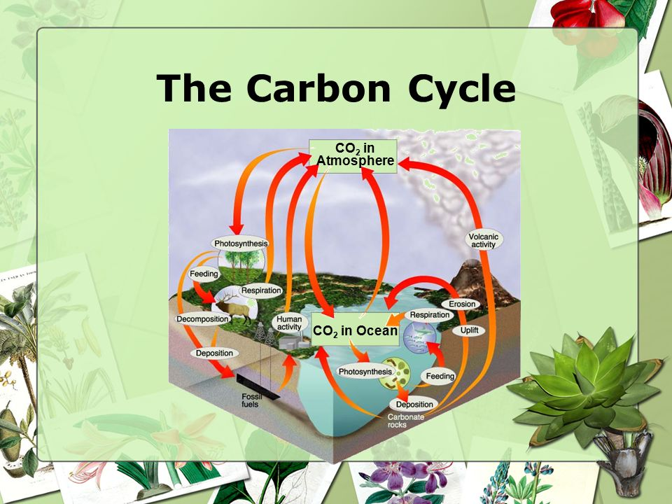 The Carbon Cycle CO2 in Atmosphere CO2 in Ocean