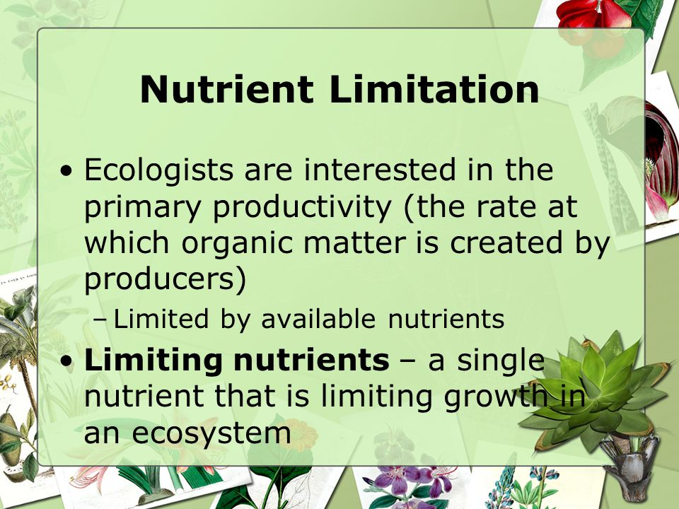 Nutrient Limitation Ecologists are interested in the primary productivity (the rate at which organic matter is created by producers)