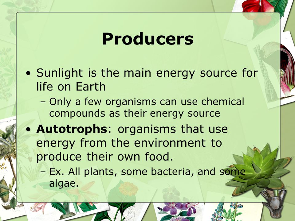 Producers Sunlight is the main energy source for life on Earth