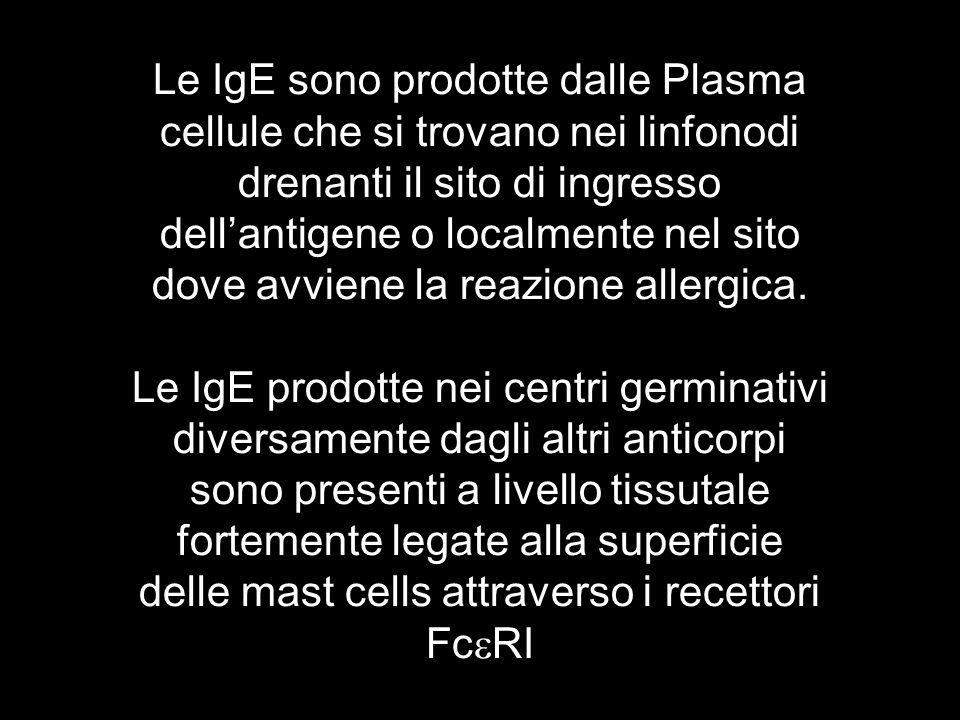 Le IgE sono prodotte dalle Plasma cellule che si trovano nei linfonodi drenanti il sito di ingresso dell'antigene o localmente nel sito dove avviene la reazione allergica.