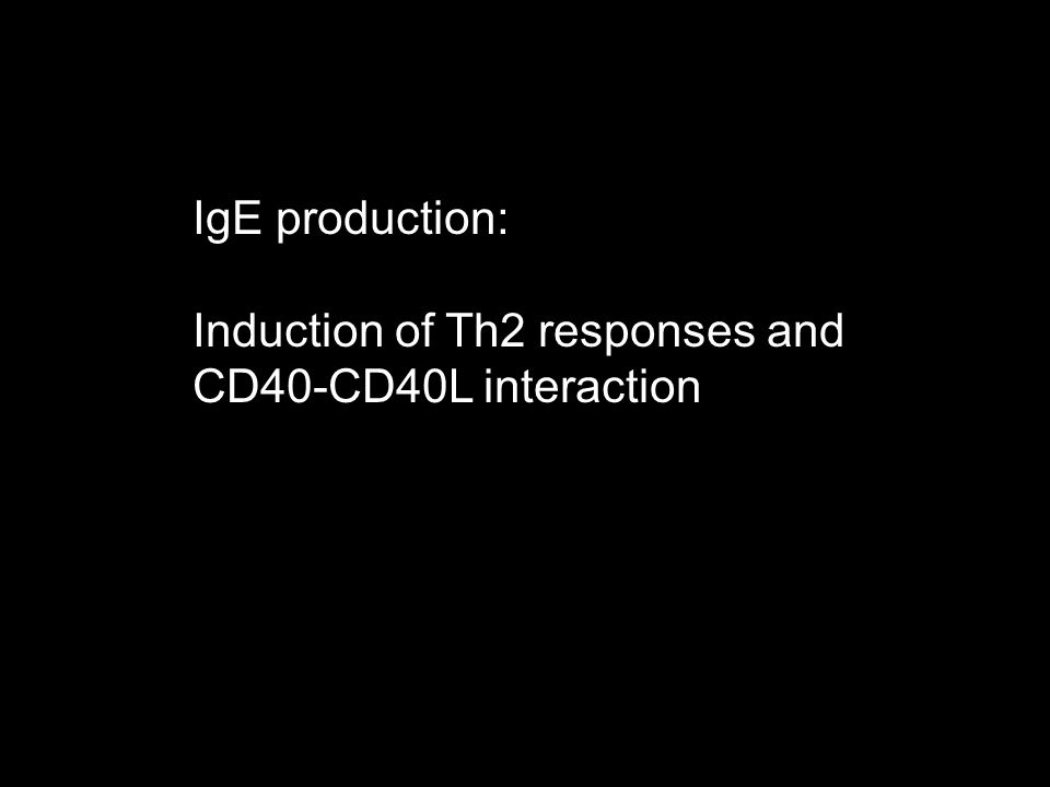 IgE production: Induction of Th2 responses and CD40-CD40L interaction