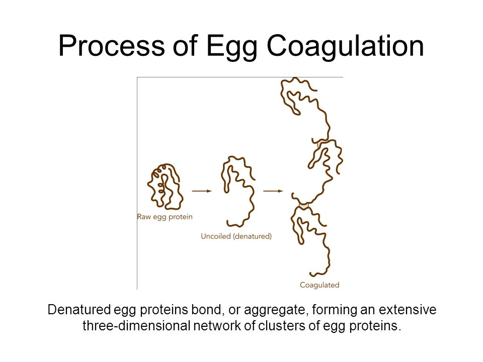 a research on the process of denaturation and coagulation Breakdown of proteins to polypeptide to amino acids is the reverse process,  if  coagulation has not occurred, denaturation can sometimes be reversed.