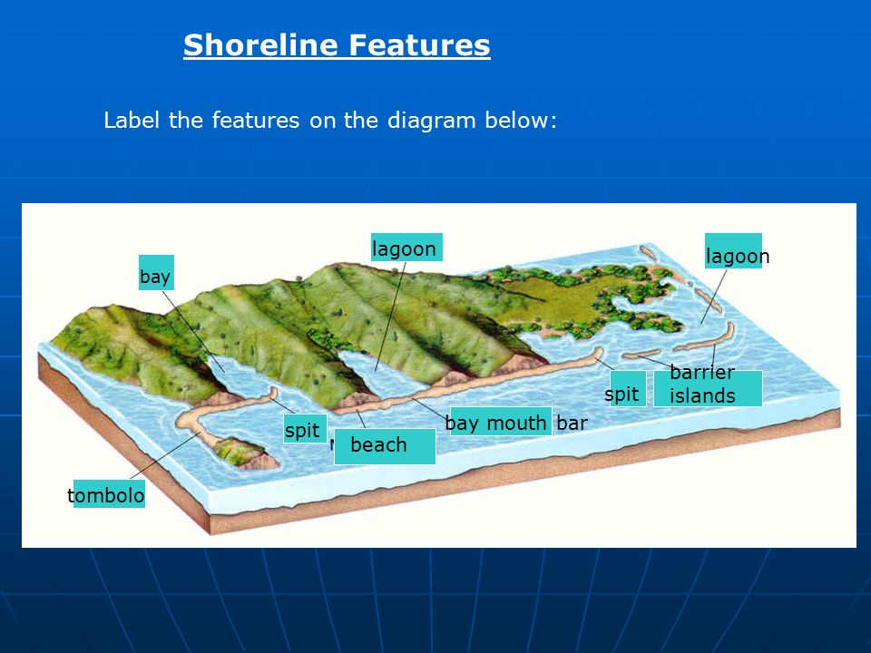 The Marine Environment - ppt video online download