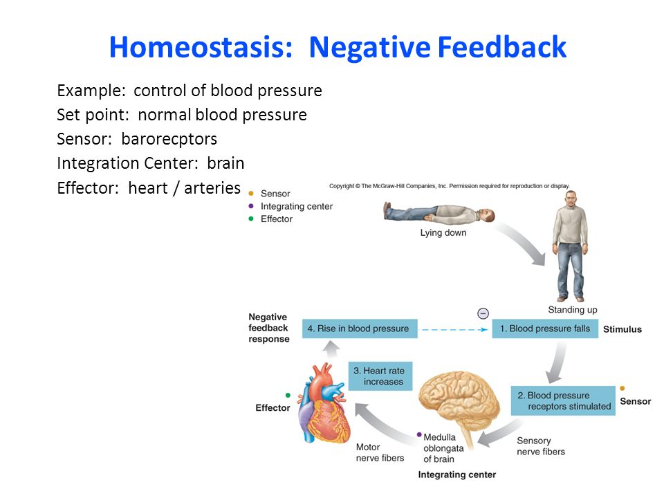 homeostasis exercise lab The effects of exercise and muscle contraction in regulation of insulin sensitivity  both whole body and in muscle is also a key area of  ann-marie pettersson, lab  technician  identification of molecular targets to improve glucose homeostasis.