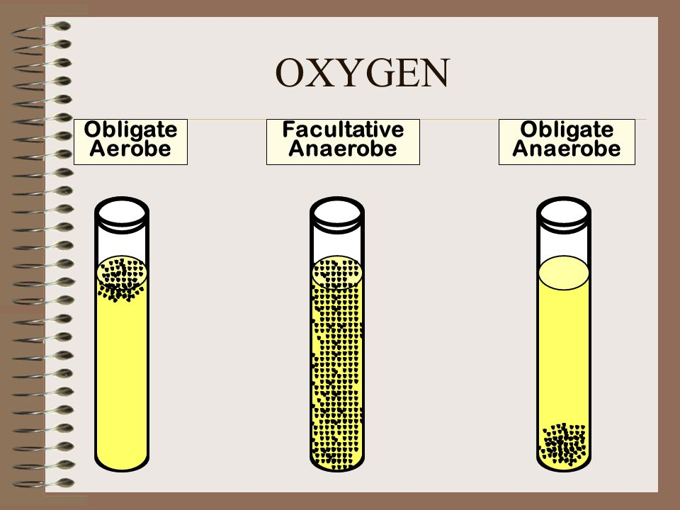 facultative and obligate Obligate anaerobes: these bacteria grow only under condition of high reducing  intensity and  2 metabolism of anaerobic and aerobic or facultative bacteria.