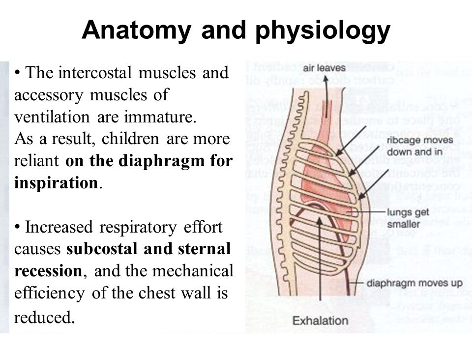 Awesome Anatomy And Physiology Of Respiratory System In Children ...
