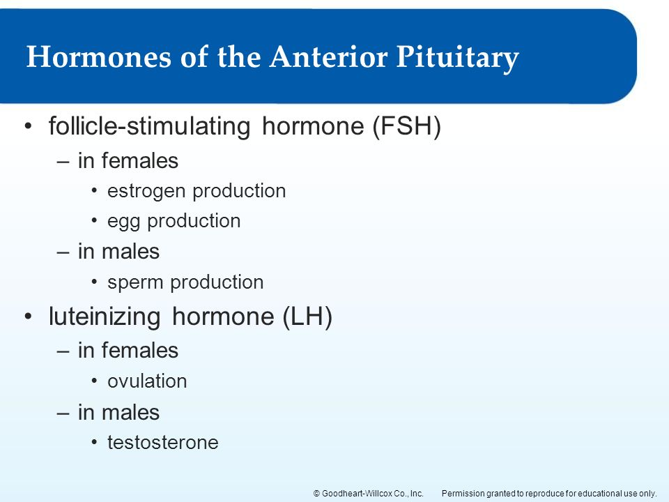 Follicle-Stimulating Hormone FSH Test