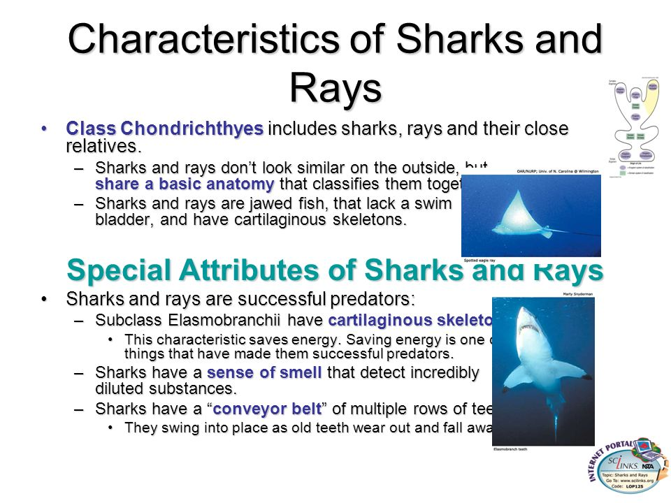 Chordates ppt download for Characteristics of fish