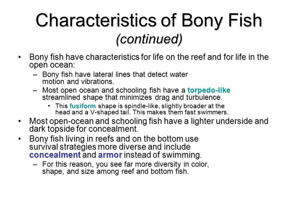 Bony fish physical characteristics all the best fish in 2018 for Characteristics of fish