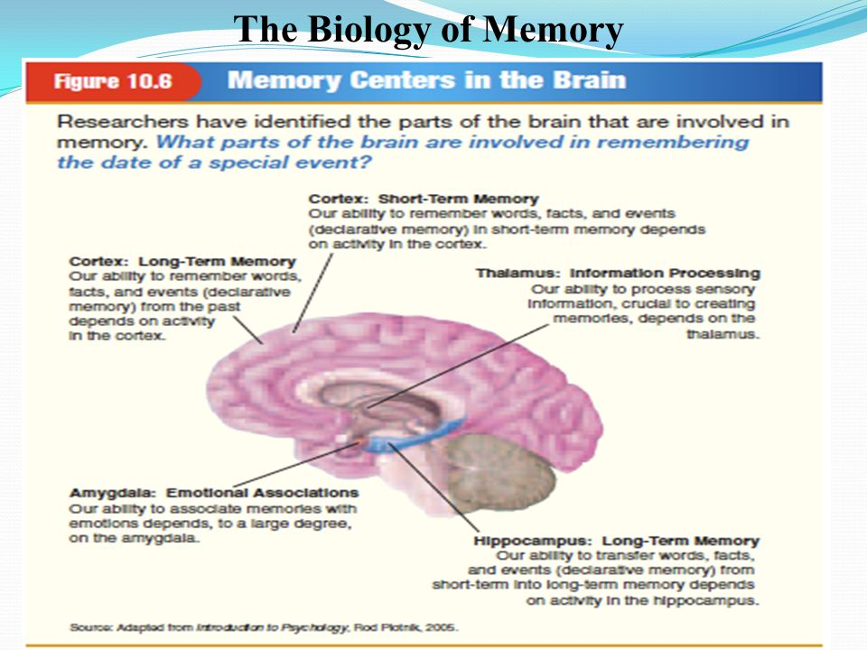 THE ROLE OF MEMORY IN THE COMPUTER