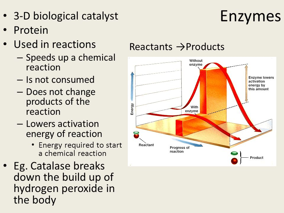 enzymes as catalysts the process of catalase decomposing hydrogen peroxide Analysis of the decomposition rate of hydrogen peroxide with catalase as a catalyst  enzyme hydrogen peroxide  - decomposition of hydrogen peroxide.