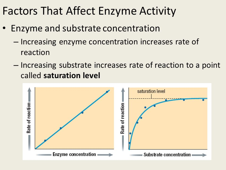 how enzyme concentration can affect rate Not just the concentration of salt, but also the identity of the ions, and the ionic strength of the solution can affect the activity of an enzyme.