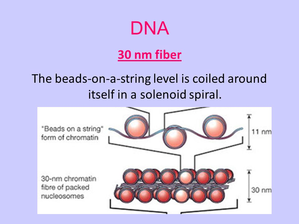 Chapter 12 DNA Information and Heredity, The Cellular Basis of ...