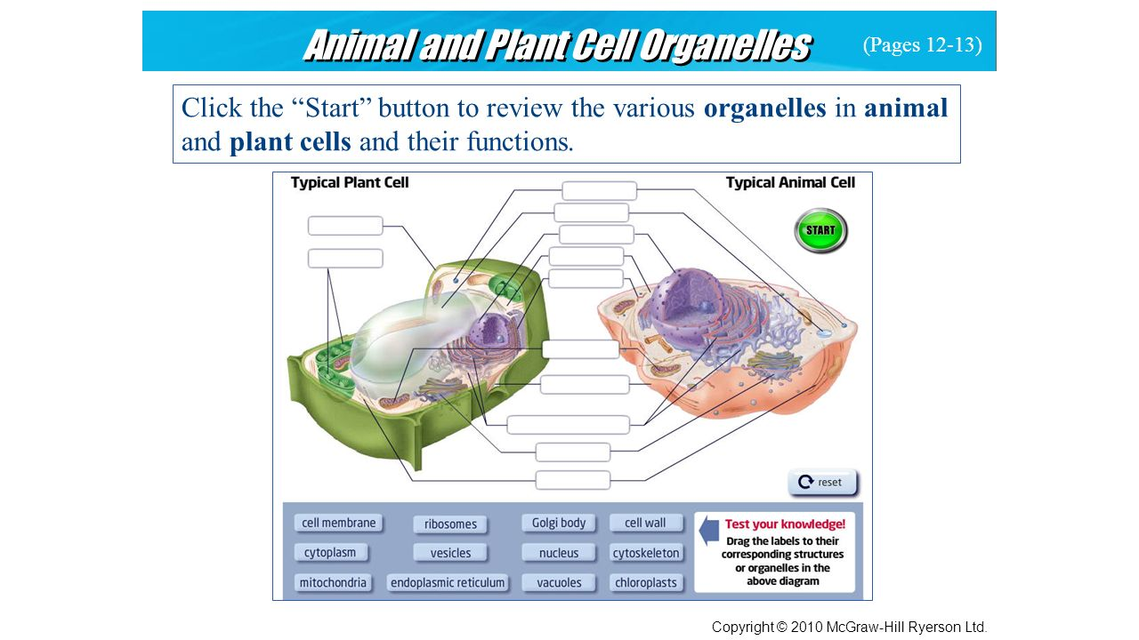 Specialized Plant Cell Diagram Electrical Wiring Cells Labeled Tissues Organs And Systems Of Living Things Ppt Download
