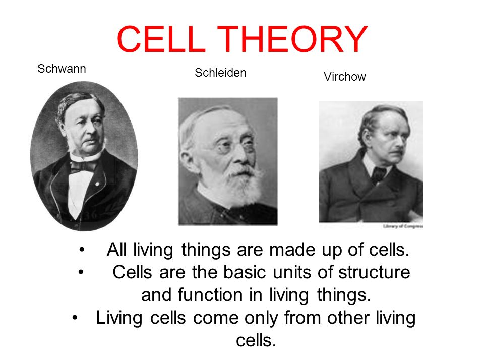 Microscopes and Cells. - ppt video online download