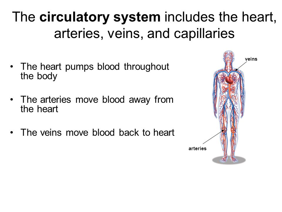 A Description Of Blood As A Fluid Substance That Circulates In The