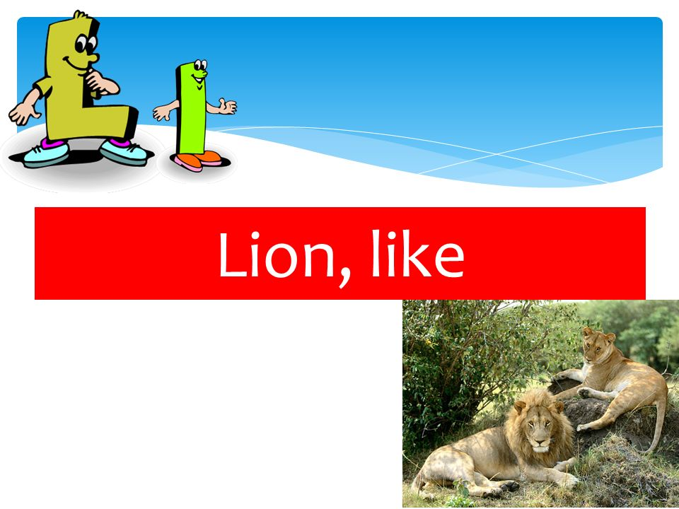 Lion, like