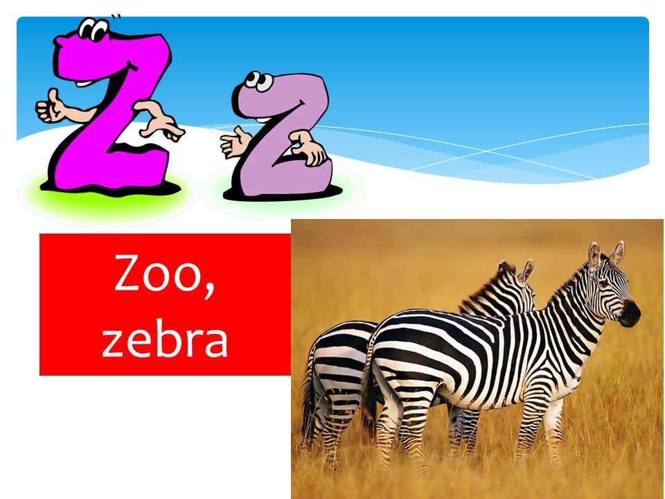 Zoo, zebra
