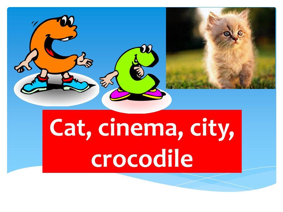 Cat, cinema, city, crocodile