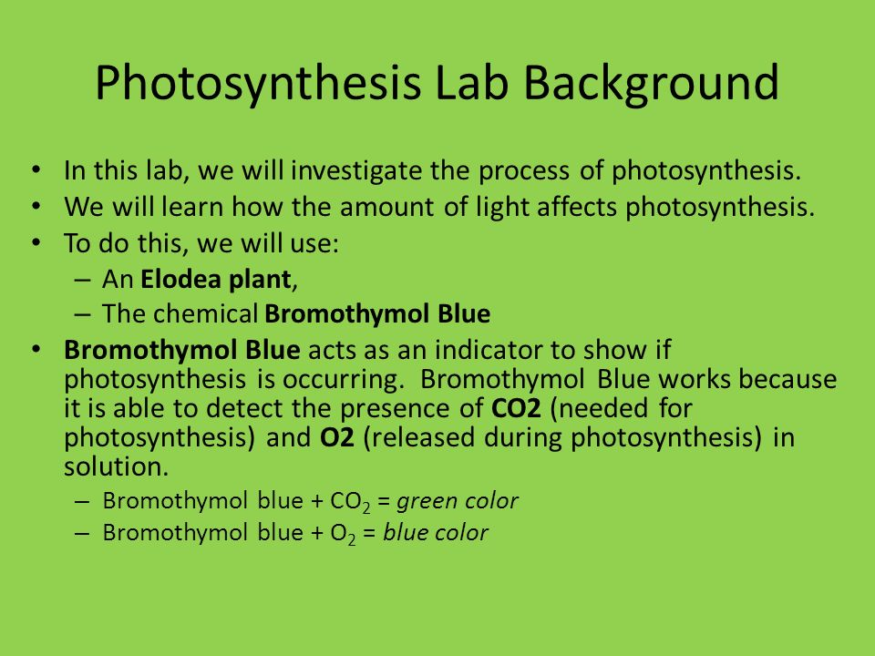 bromothymol blue elodea lab Lab #14: photosynthesis and carbon dioxide consumption elodea and bromothymol blue photosynthesis is the process by which plants take carbon dioxide from the atmosphere, add water, and use the energy of sunlight to produce sugar.