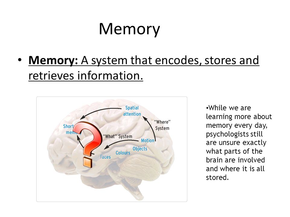remembering to remember memory and brain development psychology essay Remembering to remember memory and brain development psychology essay remembering to remember memory and brain development psychology essay.