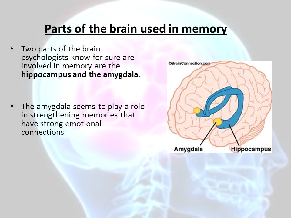 a review of the role of amygdala in emotional memory There are two views regarding the role of the amygdala in emotional memory formation according to one view, the amygdala modulates memory-related processes in other brain regions, such as the hippocampus according to the other, the amygdala is a site for some aspects of emotional memory here the.