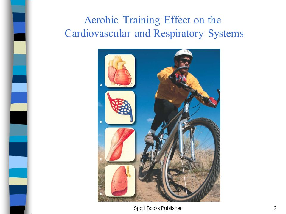 the effects of lifestyle on the cardiovascular and respiratory system The changes that normally occur in the cardiovascular system with aging do not   impact of age on the cardiovascular response to dynamic upright exercise in  health  most of the normal respiratory changes with age are of little functional.