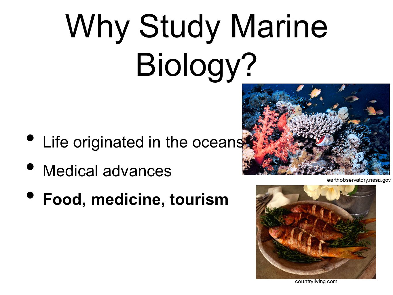 The Science Of Marine Biology  Ppt Video Online Download. Programming Classes For Beginners. High Speed Internet And Cable Packages. How To Donate To A Charity Online Law Degree. Bookkeeping And Accounting Courses. Nursing Programs In San Antonio Texas. Plumbers Arlington Texas Startup Office Space. Alternative Help For Depression. Colleges In Northern Indiana Visa Card Apr