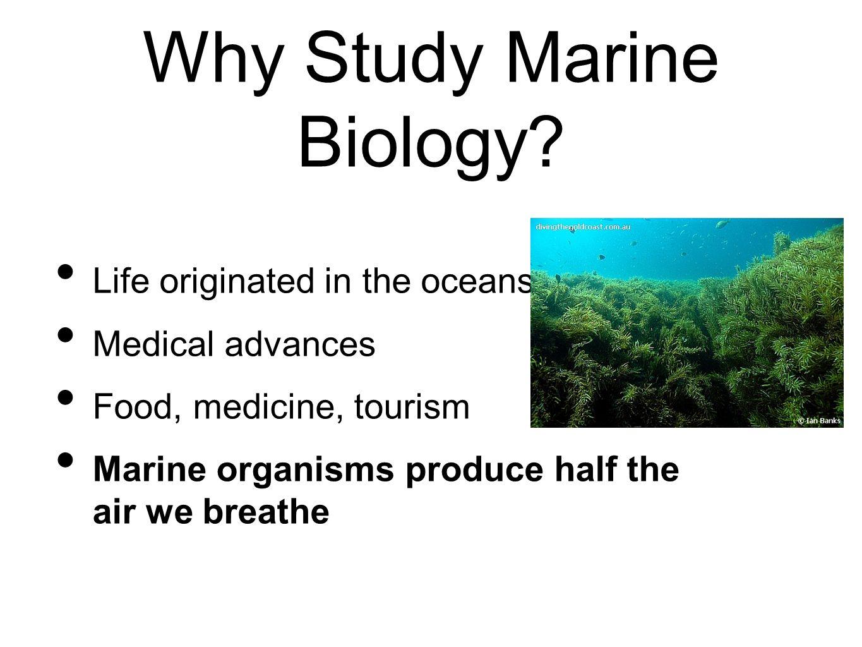 Aquatic Ecosystems Study Guide - aurumscience.com