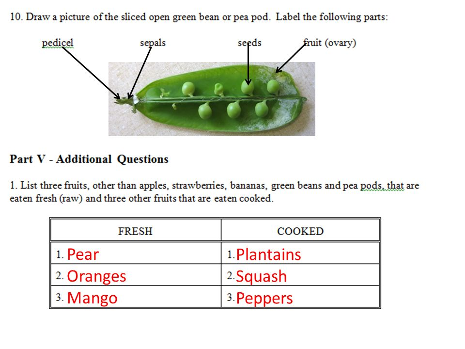 hw: study for test tomorrow. lab packets due tomorrow ... legume pod diagram  #11