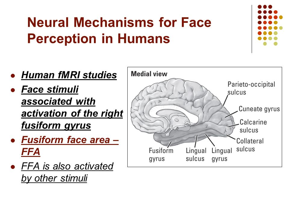 understanding the human face as a stimulus A primitive reflex is displayed by normal human infants and not neurologically intact adults  tickle is hard to understand  of a person's face .