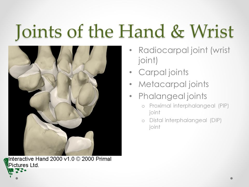 Anatomy Chapter 6 Study Guide Flashcards Quizlet 2272187 ...