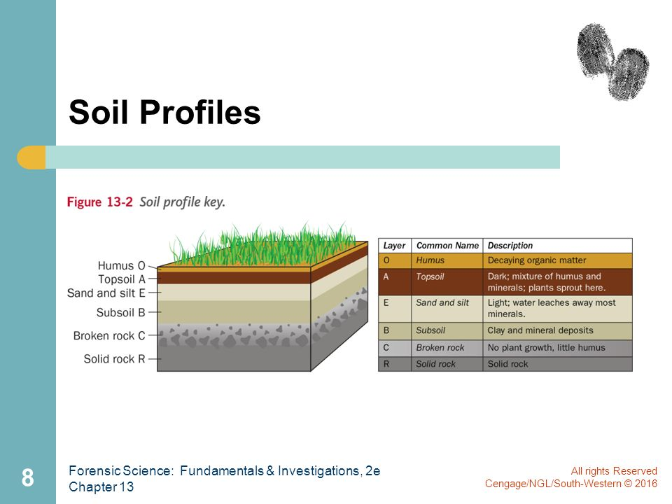All rights reserved cengage ngl south western ppt video for Soil profile video