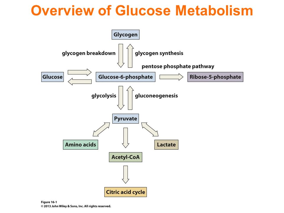 Hormones 48625084 likewise 382102349608561205 together with Diabetes besides Endocrine System 15785852 moreover How Do Use Insulin Pump. on endocrine blood sugar