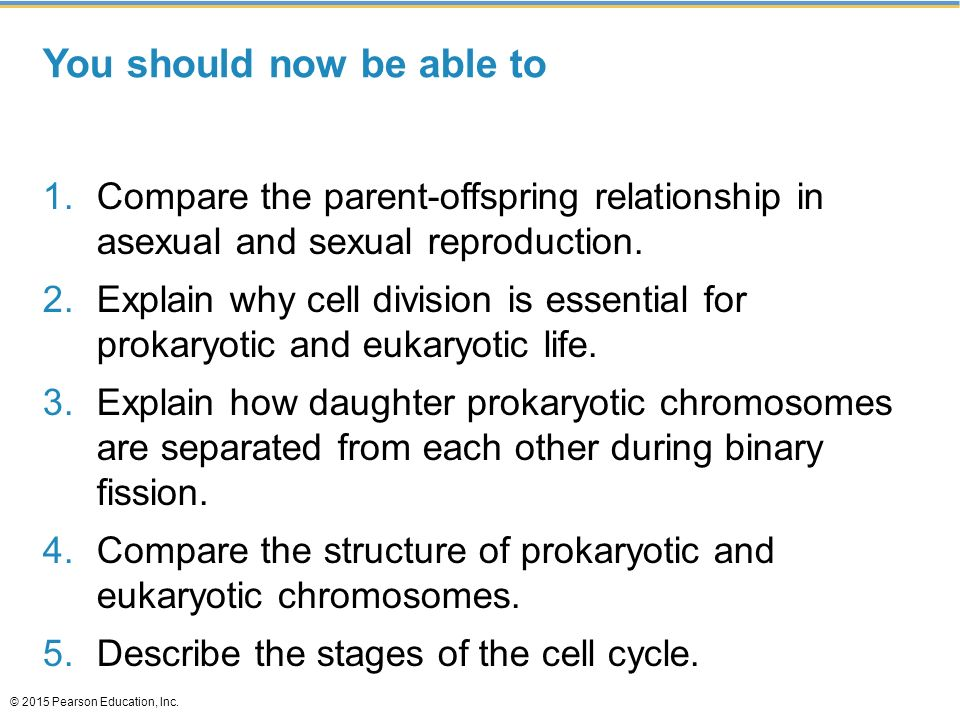 compare the parent offspring relationship in asexual and sexual reproduction