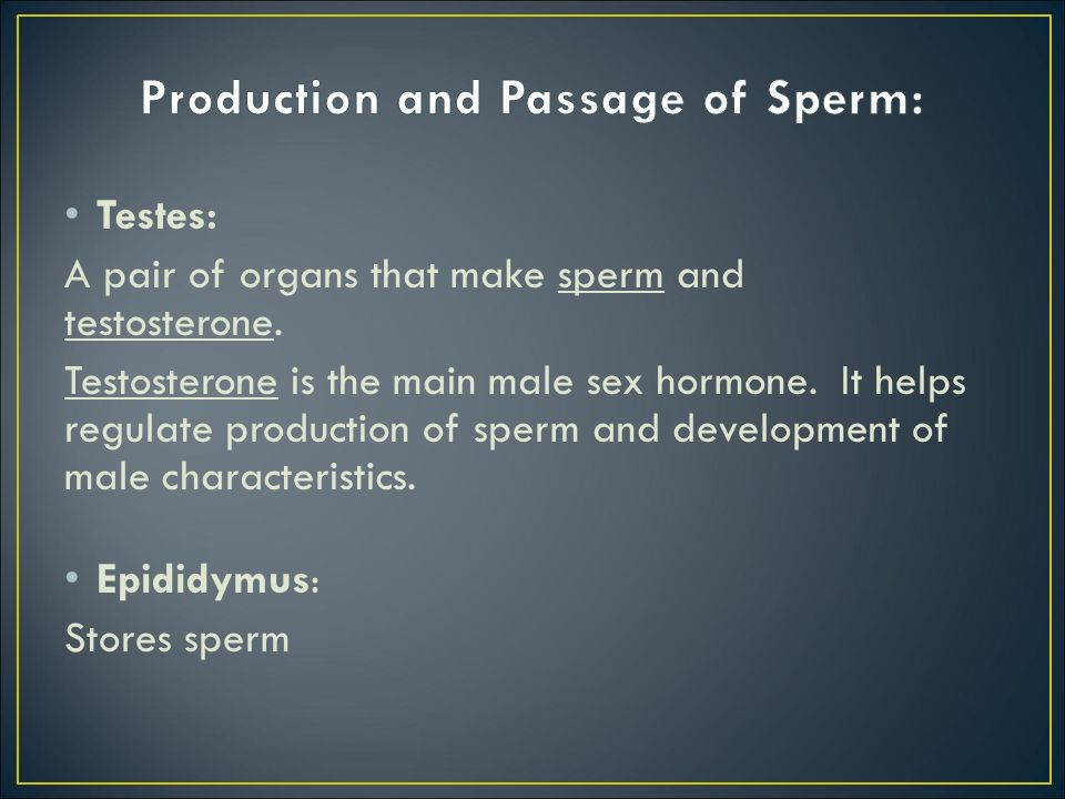 Production and Passage of Sperm: